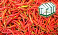 pepperoni paprika öntözése növényházban