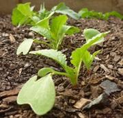 retek szántóföldi esőztető öntözése, mezőgazdasági öntözés